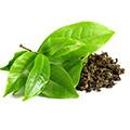Estratto di Tè Verde