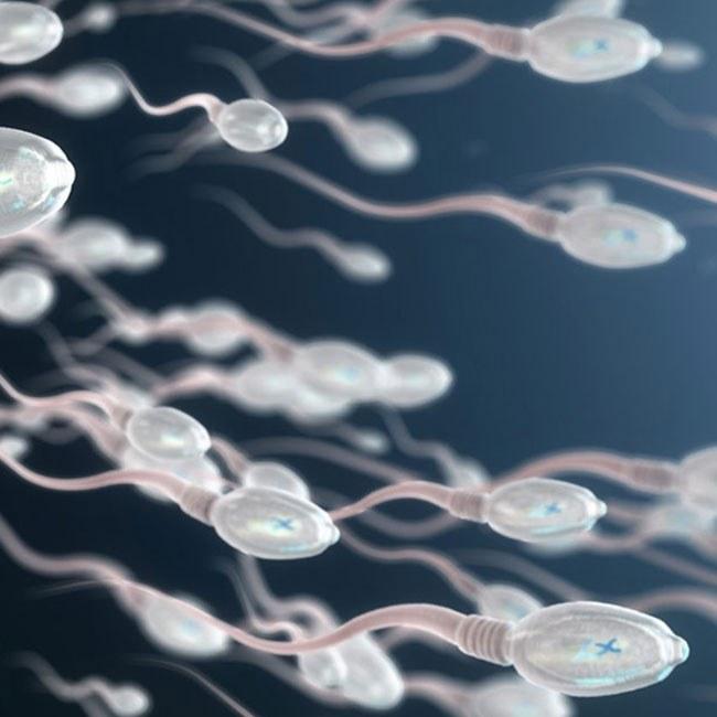 Tutto quello che ti serve sapere sullo Sperma