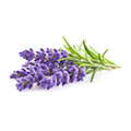 image of Lavender Oil