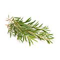 image of Tea Tree Oil
