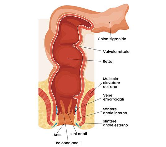 anatomia dell'ano